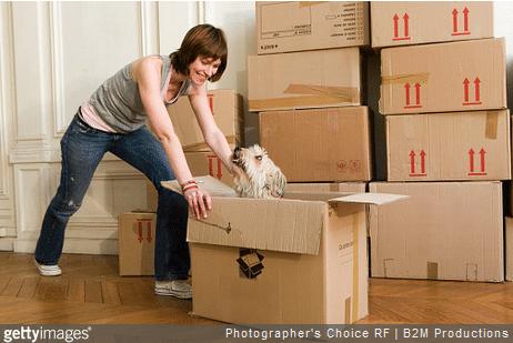 Chien chat : comment leur faciliter un déménagement ?